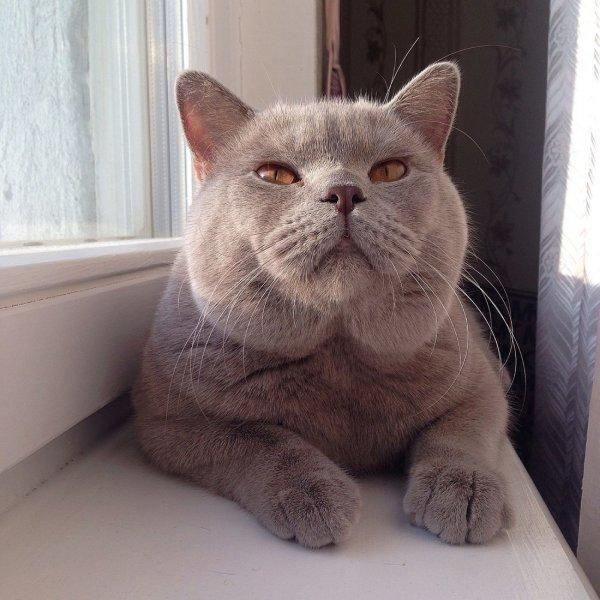 Ученые рассказали, почему кот может променять хозяина на еду