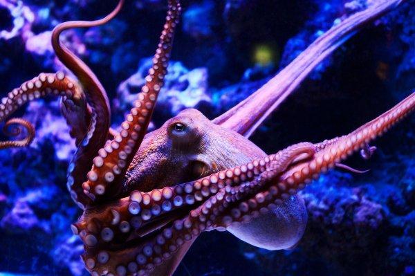 «Звучит нелепо»: Стала известна реакция ученых на осьминогов-инопланетян