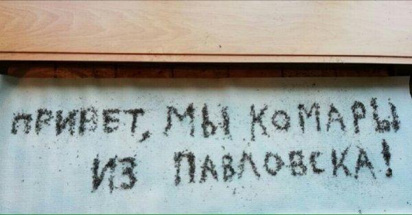 В Воронежской области составили надпись из убитых комаров