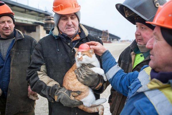 Кот Мостик может стать лицом собственного бренда