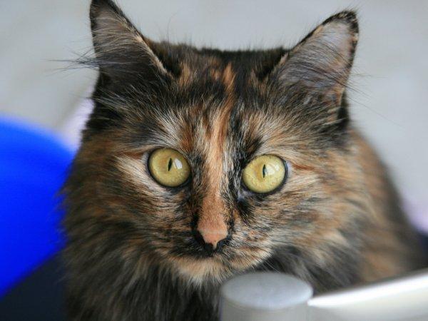 В США кошка каталась на крыше авто со скоростью 100 км/ч