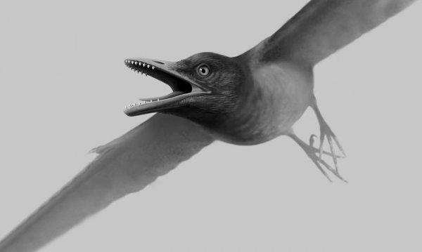 Ученые объяснили причину отсутствия зубов у птиц