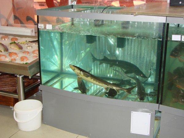 Смелый побег большой рыбы из гипермаркета Ростова попал на видео