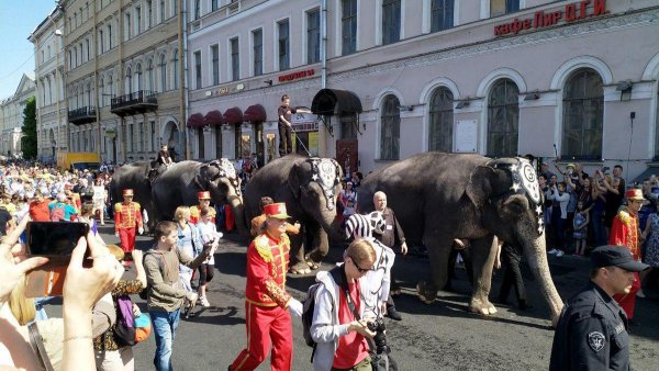 В Петербурге по улице прошлись настоящие слоны