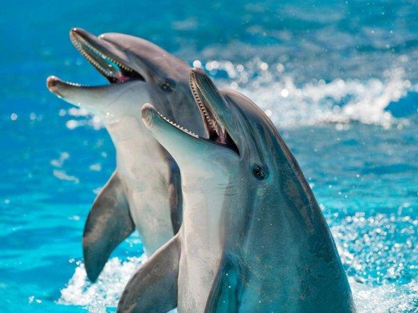 Ученые впервые измерили уровень счастья у дельфинов