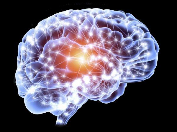 Ученые: Чем выше уровень интеллекта, тем проще строение мозга
