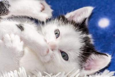 Аллергию на кошек будут лечить прививками