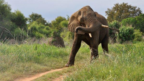 В Индии Разгневанный слон затоптал своего хозяина