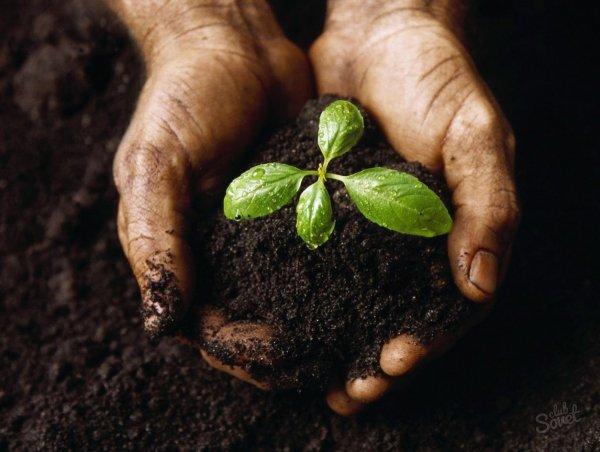 Экзотические растения становятся «дикими» и переходят в наступление