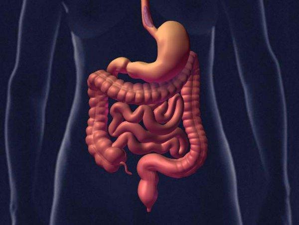 Медики обнаружили тайный «мозг» в кишечнике