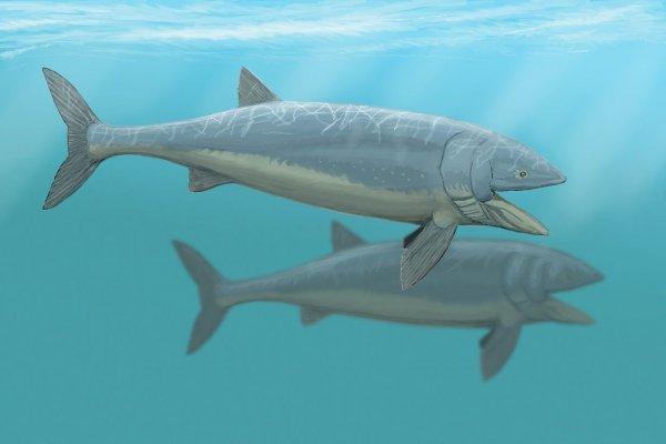 Ученые удивились скорости и весу древних рыб