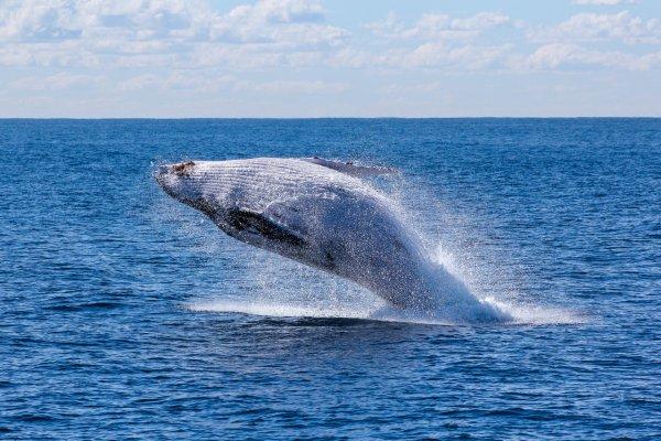 Появившийся в Красном море синий кит удивил экологов