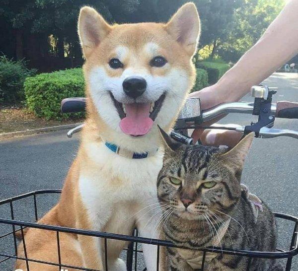 Реакция кота и пса на поездку в корзине велосипеда рассмешила пользователей Сети