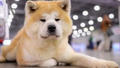 Собаки станут источником новых эпидемий гриппа, - ученые
