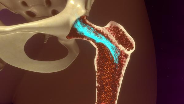 Ученые: Искусственная модель кости с красным костным мозгом поможет победить болезни крови