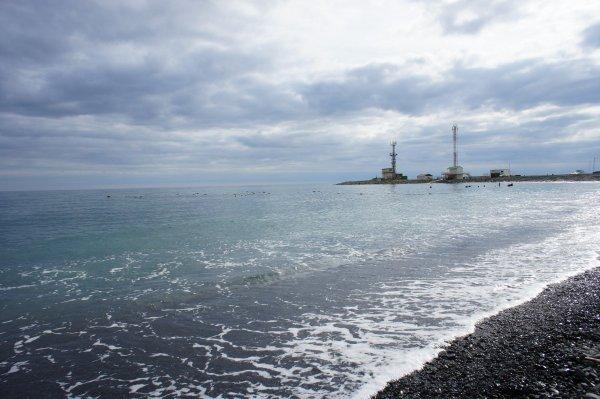 В Черном море появились ядовитые морские драконы
