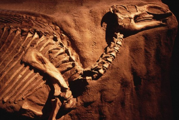 Поиски динозавров возобновятся на Кузбассе