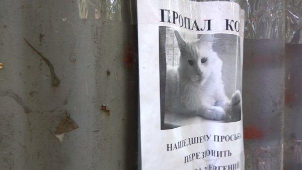 Жуткая оптическая иллюзия со «следящим котом» набирает популярность в Сети