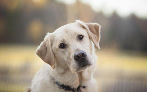 Эксперты на собаках проанализировали отношение полных людей к еде