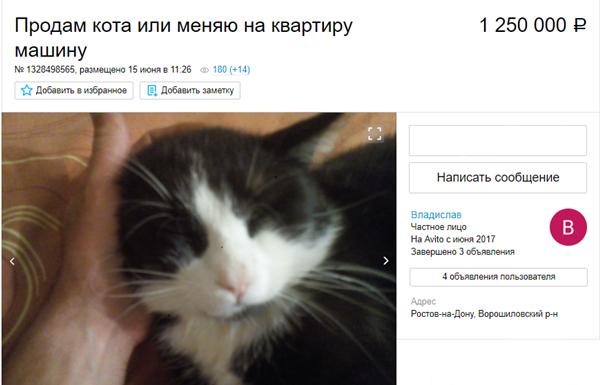 В Ростове мужчина продает кота за 1,25 миллиона рублей или меняет на квартиру