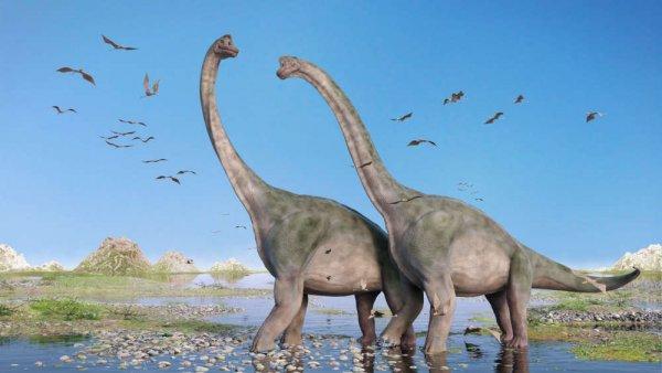 В селе Кузбасса нашли кость динозавра