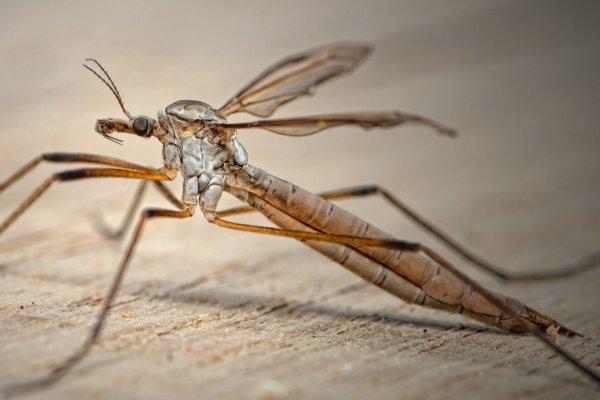 Москиты помогут ученым создать безболезненную иглу