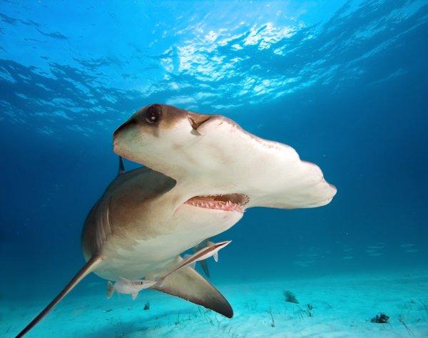 На гавайском пляже нашли много мертвых детенышей акул