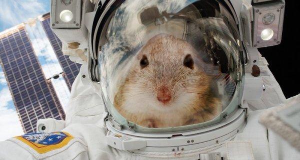 Мыши отправились в космос, чтобы помочь человечеству быстрее полететь на Марс