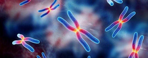 Учёные изучили мутировавший ген TRAF7, ставший причиной сложных заболеваний