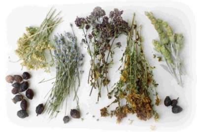 Эти лекарственные растения признаны самыми эффективными