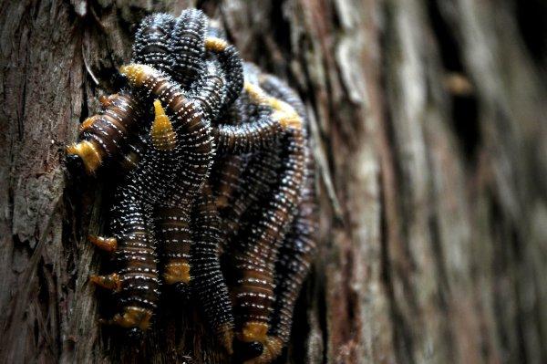 Вылезший из крана червь-мутант шокировал южноуральцев