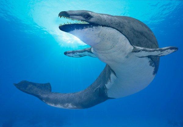 Ученые обнаружили след подводного монстра около побережья Калифорнии