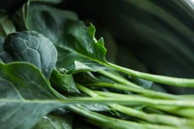 Диетологи рассказали о пользе пророщенных семян
