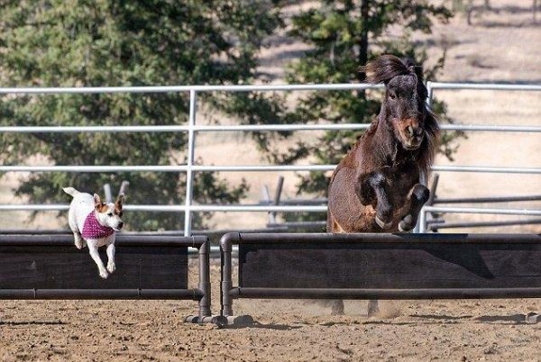 В США на ферме пес и лошадь стали лучшими друзьями