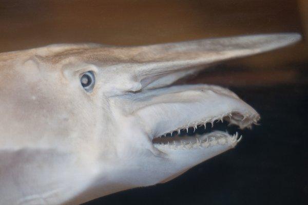 К 2050 году увеличится количество акул у берегов Великобритании