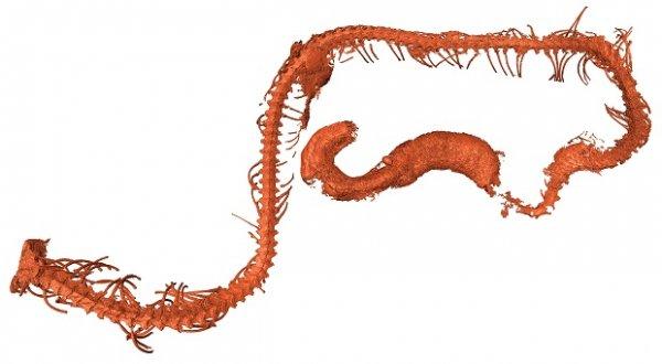 Застывший в янтаре древнейший змееныш найден в Мьянме