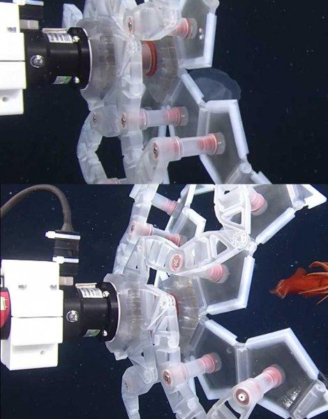 Инженеры из США придумали, как ловить морских животных без вреда для них