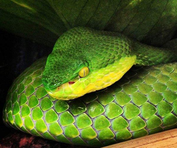 «Хорошие манеры»: в Канзасе змея попыталась позвонить в дверь, прежде чем проникнет в дом