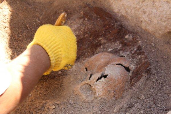 В Аргентине обнаружили останки огромного динозавра