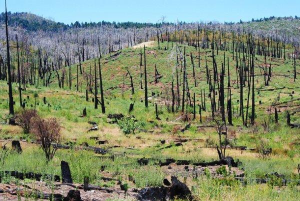 В нескольких округах Калифорнии ввели чрезвычайное положение из-за пожаров