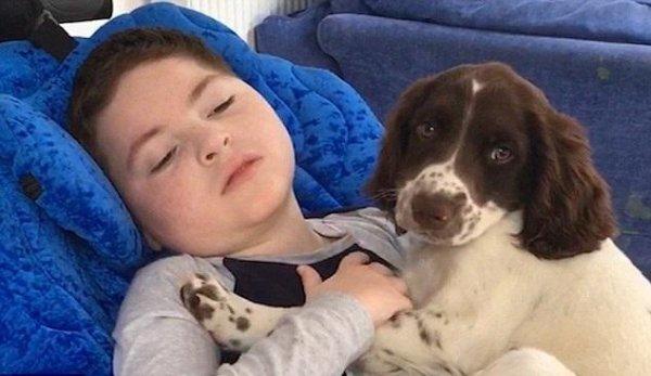 Трогательное видео мальчика-инвалида и щенка спаниеля потрясло Сеть