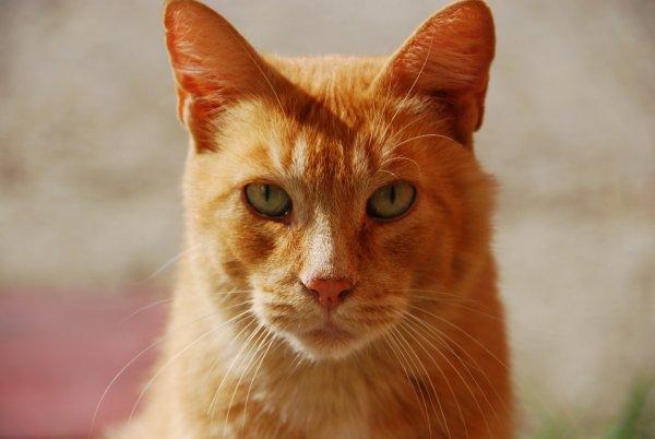 Возвращение блудного пушистика: В США кот «пришел» домой после семи лет странствий