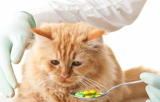 В США ветеринары делают из животных наркозависимых