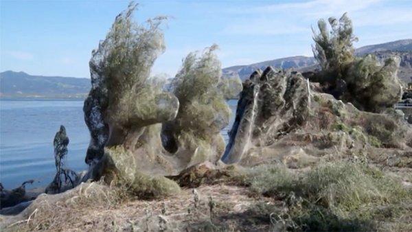 Нашествие пауков-мутантов: Часть побережья Греции покрылась густой паутиной
