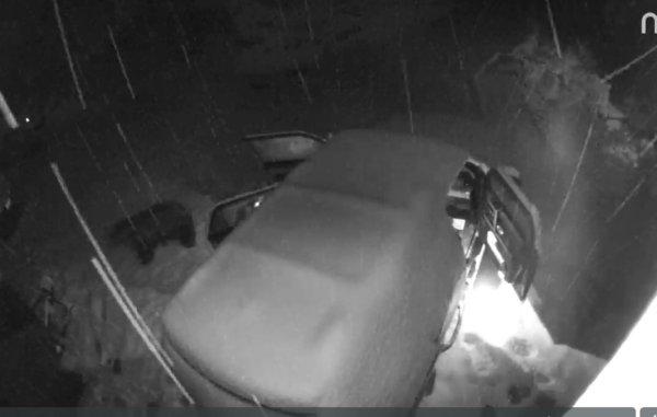 Решил погреться: медведь в Колорадо проник в припаркованный автомобиль