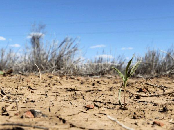 Небывалая засуха нанесла огромный урон экономике Германии