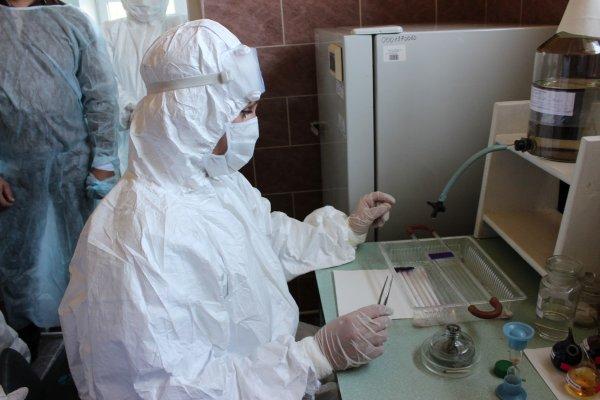 Роспотребнадзор предупредил о вспышке сибирской язвы на Украине и в Казахстане
