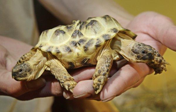 Черепаха-мутант с двумя головами из Китая ужаснула пользователей Сети