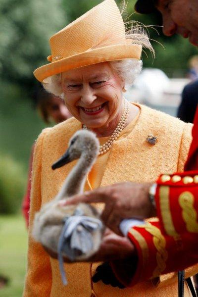 Лебедей королевы Елизаветы жестоко расстреляли в графстве Кент – СМИ