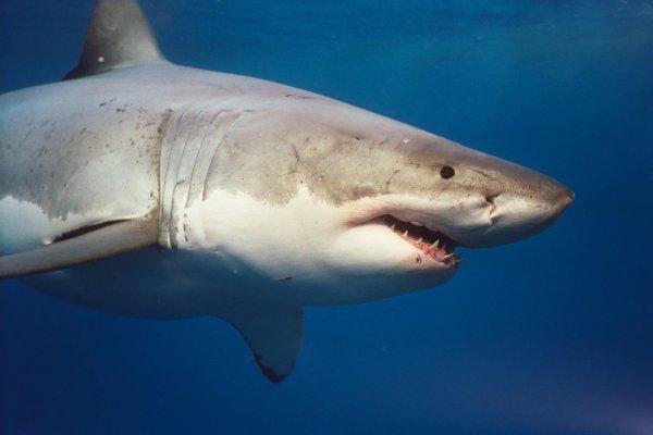 У берегов США акула чуть не убила 13-летнего мальчика